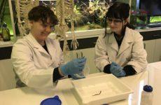Więcej o: Klasa 2A i 2B na zajęciach laboratoryjnych w Centrum Nauki Kopernik